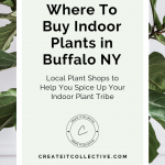 Where To Buy Indoor Plants in (and around) Buffalo NY