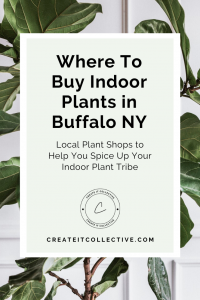 Where To Buy Indoor Plants in Buffalo NY | Create it Collective